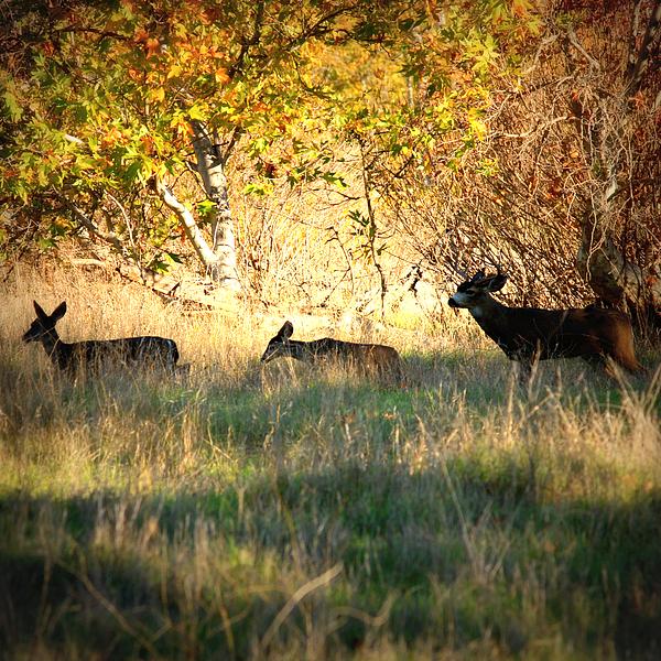 Deer Photograph - Sycamore Grove Series 10 by Carol Groenen