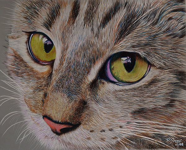 Cat Painting - Tabby Stare by Don MacCarthy