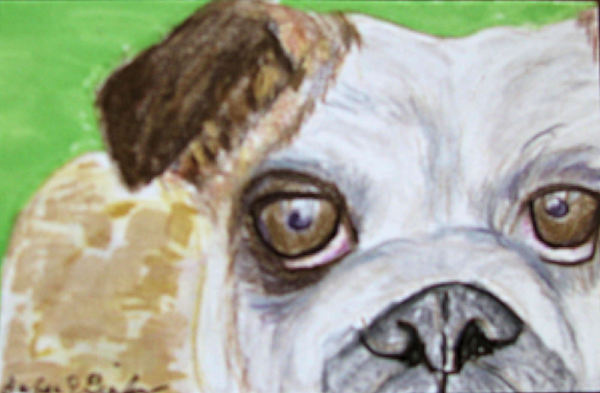 English Bulldog Drawing - Take Me Home - Bulldog by Barbara Giordano