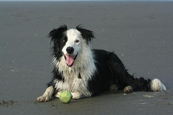 Dog Photograph - Taking Five by JoJo Photography
