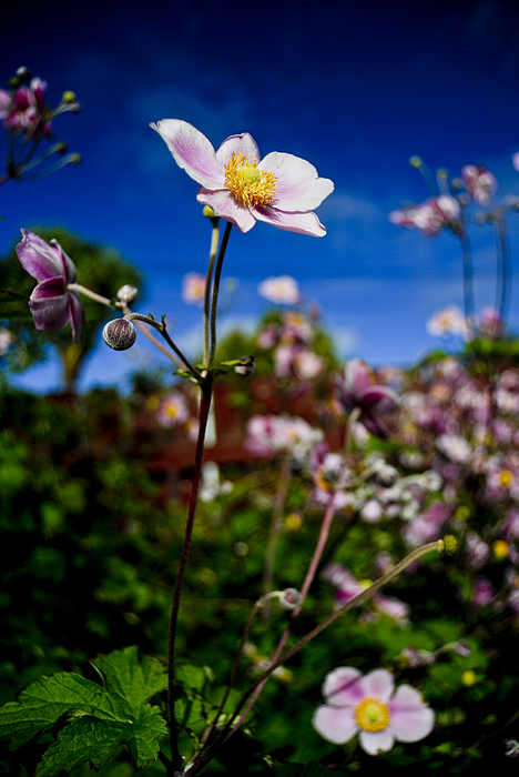 Bloom Photograph - Tall And Pink by Lee Malzard