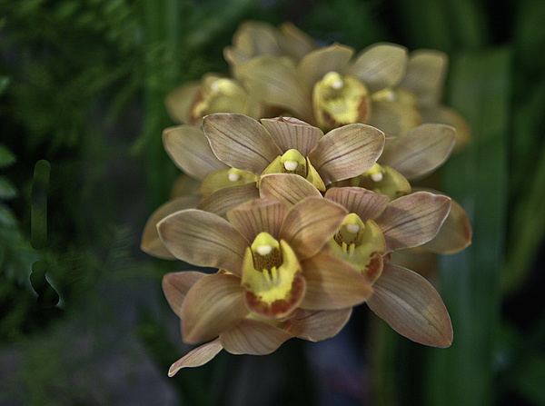 Orchid Photograph - Tan And Yellow Orchid by Liz Santie