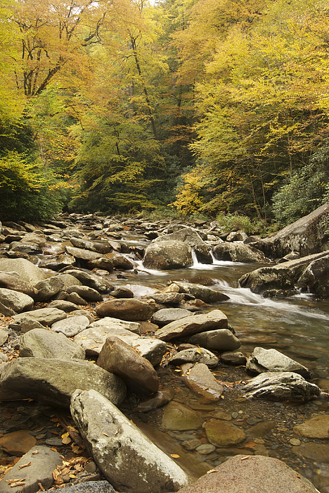 Autumn Photograph - Tennessee Autumn Stream 6059 by Michael Peychich