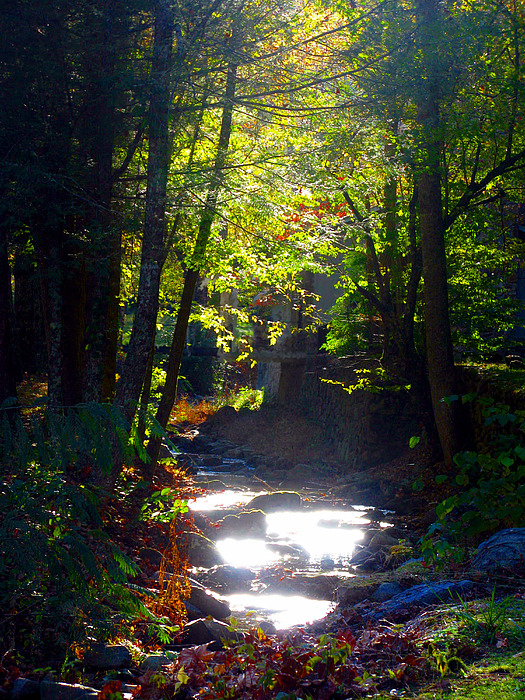 Fall Photograph - Tennessee Spring by Brittany Horton