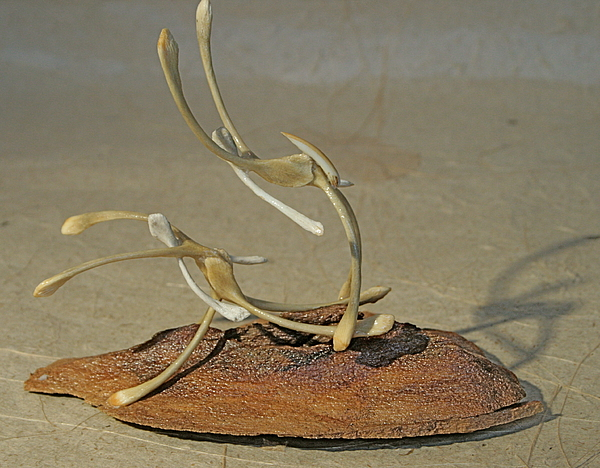 Wishbones Sculpture - The Acrobats by Ruth Edward Anderson