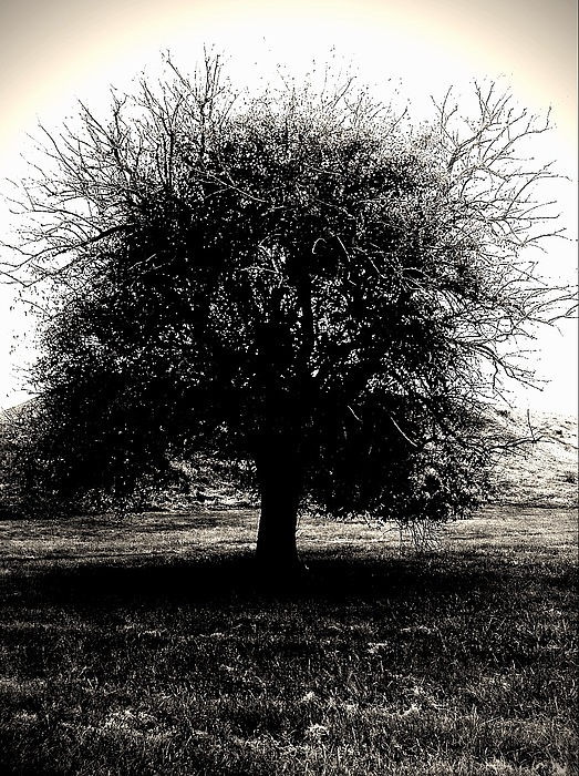 Tree Photograph - The Ancient Sentinel by John McGarity