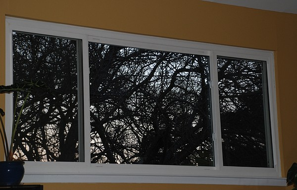 Window Photograph - The Branch Window by Rob Hans