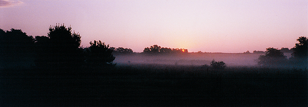 Forest Photograph - The Brass Band Of Dawn by Tom Hefko