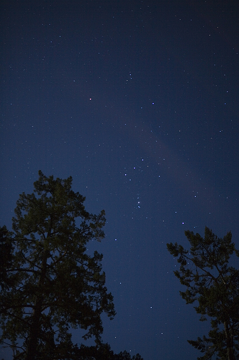 Sooke Photograph - The Constellation Orion At Night by Taylor S. Kennedy