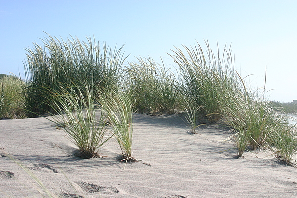 Nature Photograph - The Dunes by Dennis Curry