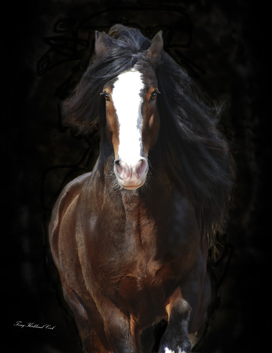 Equine Photograph - The English Shire As Art by Terry Kirkland Cook