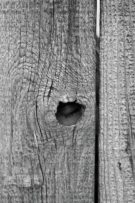 Fence Photograph - The Fence That Sleeps by Douglas Barnett
