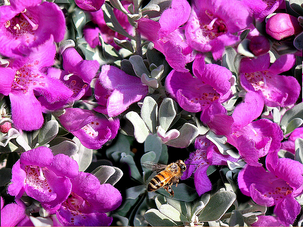 Nature Photograph - The Flight Of The Bumble Bee by Lucyna A M Green