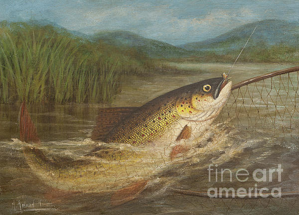 Fish Painting - The Fly Fishermans Net by A Roland Knight