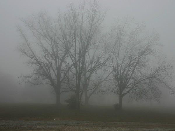 The Fog Photograph by Lisa Miller
