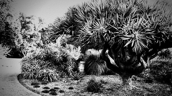 Melbourne Photograph - The Gardens by Douglas Barnard