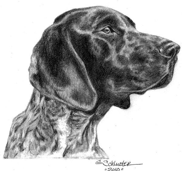 Short Haired Black And White Dog