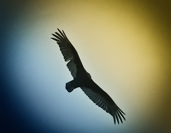 Birds Photograph - The Hawk by Bill Cannon