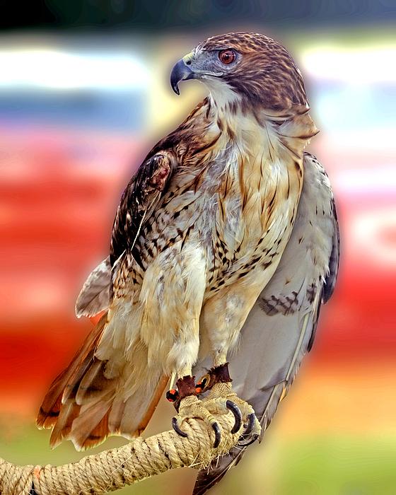 Portrait Photograph - The Hawk by Joseph Williams