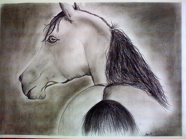 Horse Painting - The Horse by Amith GC