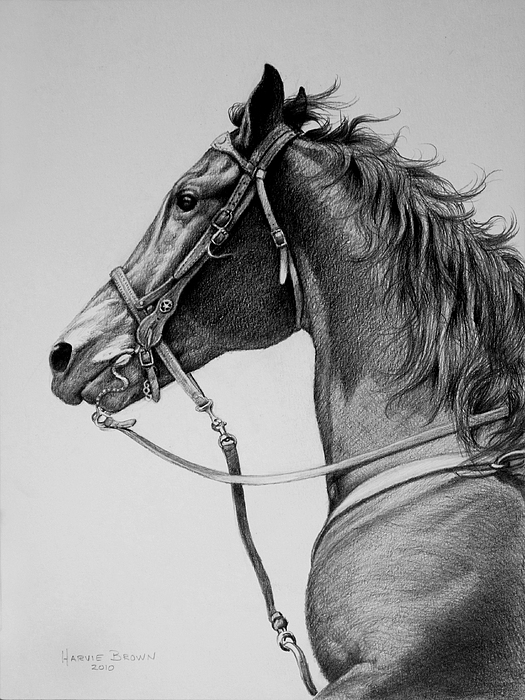 Horse Drawing - The Horse by Harvie Brown