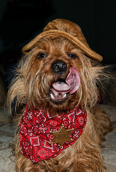 Dogs Photograph - The Long Tongue Of The Law by Norma Rowley