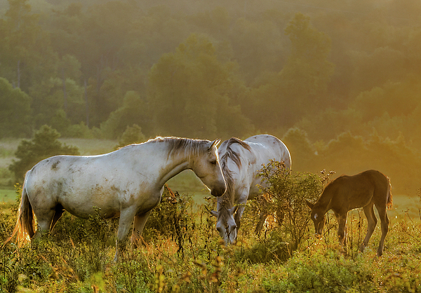 Horse Photograph - The Next Generation by Ron  McGinnis