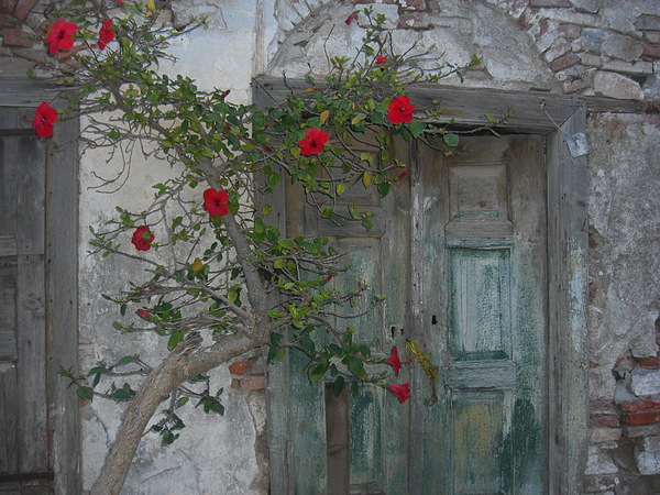Flowers Photograph - The Old Door And The Rose Bush by Wilhelm Terrada