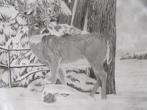 Whitetail Deer Drawing - The One That Got Away by Wanda Alberta