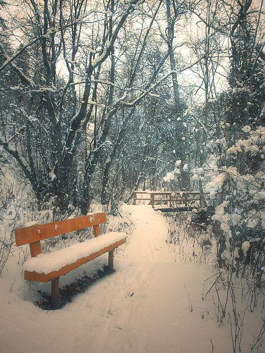 Trail Photograph - The Orange Bench by Tara Turner