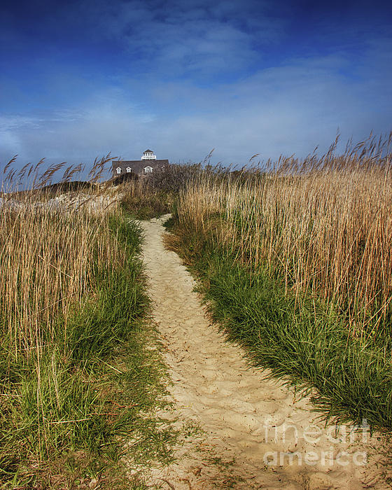 Sand Photograph - The Pathway Home by Tom Gari Gallery-Three-Photography