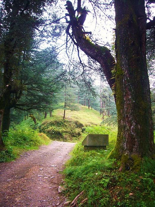 Nature Photograph - The Pathway by Sunaina Serna Ahluwalia