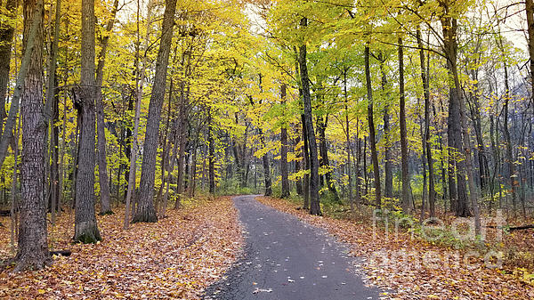 Fall Photograph - The Pathway To Fall by Ricky L Jones