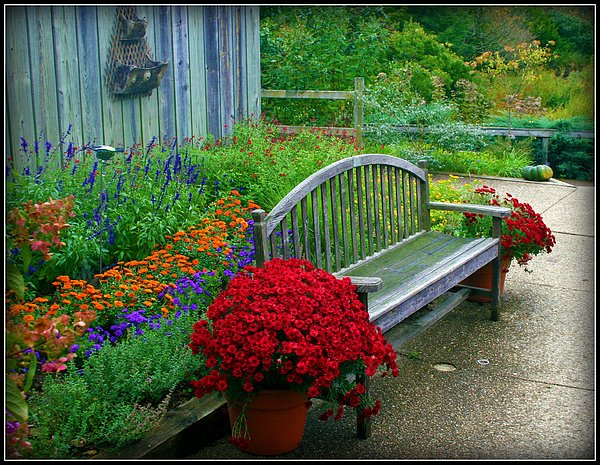 Garden Photograph - The Quiet Place by Elizabeth Babler