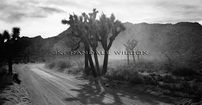 The Road Less Traveled Photograph by K Randall Wilcox