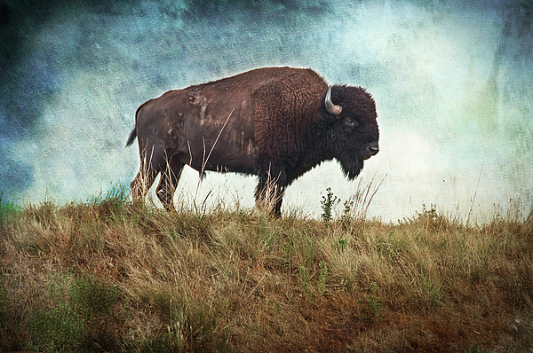 Buffalo Photograph - The Stance by Tamyra Ayles