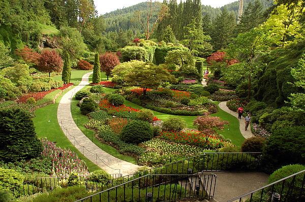 Butchart Gardens Photograph - The Sunken Garden At Butchart Gardnes by Darlyne A. Murawski