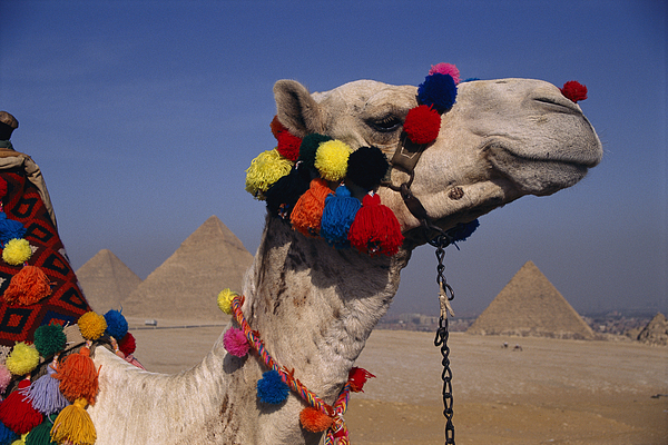 Pyramids Of Giza Photograph - The Three Great Pyramids Of Giza by Stephen St. John
