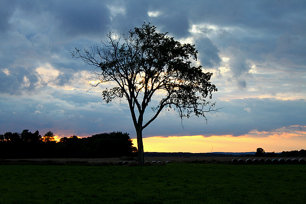 Sunset Photograph - The Tree Of Life by Mark  France