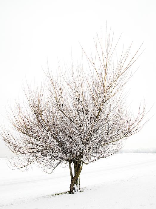 Tree Photograph - The Tree by Svetlana Sewell
