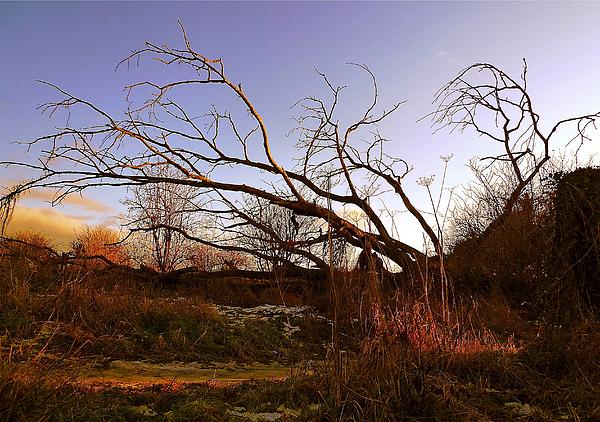 Landscape Photograph - The Twilight Tree by Sophia Shine
