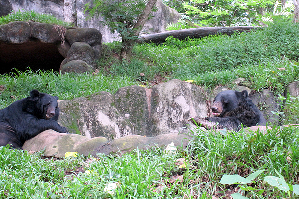Animals Photograph - The Two Black Bears by Siddarth Rai