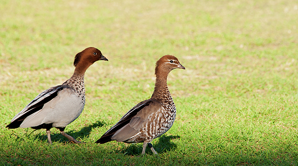 Western Australia Photograph - The Two Of Us by Heather Thorning