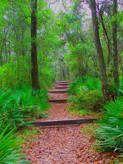Green Photograph - The Way Up by Judy  Waller