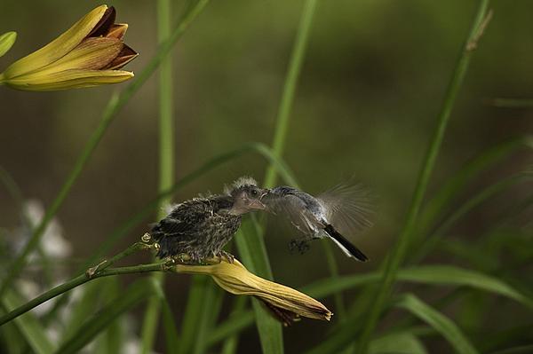 Baby Photograph - The Whole Bug 8 by E Mac MacKay
