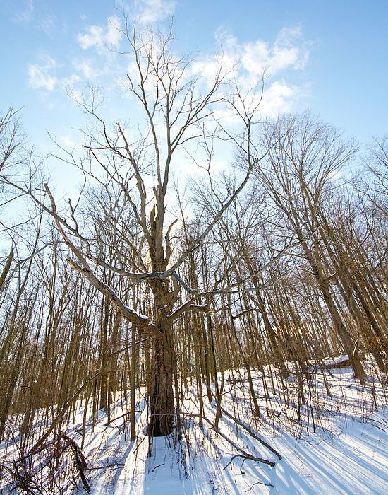 Bath Nature Preserve Photograph - The Winter Woods by Tim Fitzwater