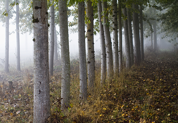 Fog Photograph - The Woods by Rebecca Cozart