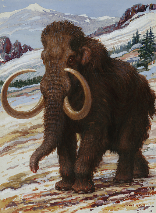 Day Photograph - The Woolly Mammoth Is A Close Relative by Charles R. Knight