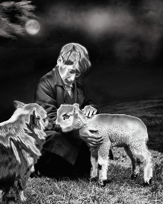 Lambs Mixed Media - The Young Ones by Pennie  McCracken