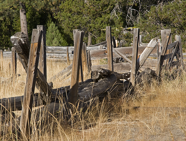 Fence Photograph - This Old Fence by Charlie Osborn